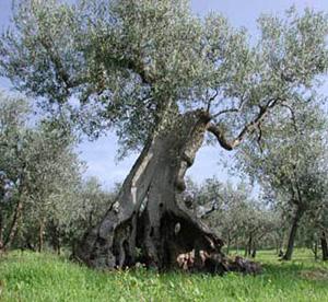Tra le fronde di un albero un miracolo vero